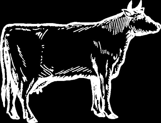 10 kg Premium Rindfleisch
